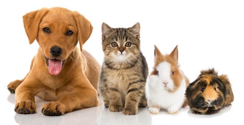 dog.cat_.rabit_.guineapig.animals-e1509470250428